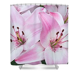 Pink And White Lilies Shower Curtain by Jane McIlroy