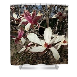 Shower Curtain featuring the photograph Pink And White Spring Magnolia by Caryl J Bohn