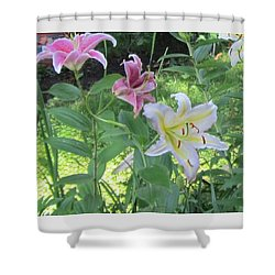 Pink And White Stargazer Lilies Shower Curtain