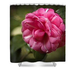Pink And White Stripped Camellia Shower Curtain by Penny Lisowski
