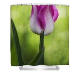 Pink And White Tulip Shower Curtain by Shelly Gunderson