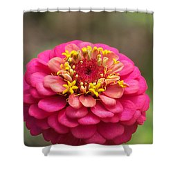 Shower Curtain featuring the photograph Pink Floral  by Eunice Miller
