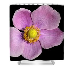 Pink Anemone Shower Curtain by Matthias Hauser