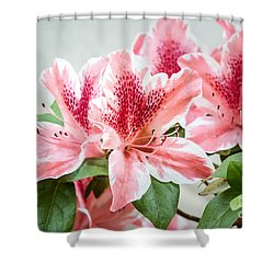 Pink Azaleas Shower Curtain