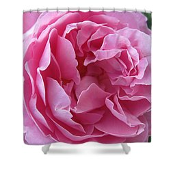 Shower Curtain featuring the photograph Pink Beauty by Pema Hou