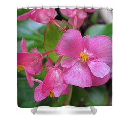 Pink Begonias Shower Curtain by Barbara Yearty