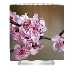 Pink Blossom Shower Curtain by Joy Watson