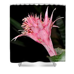 Pink Bromeliad Bloom - Close Up Shower Curtain by Kaye Menner
