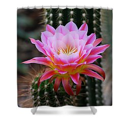 Pink Cactus Flower Shower Curtain by Nancy Mueller