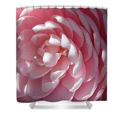 Pink Camellia Closeup Shower Curtain by Carol Groenen