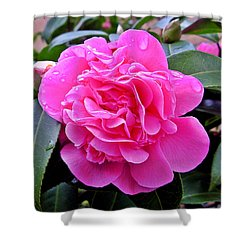 Pink Camillia Shower Curtain