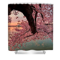 Pink Cherry Blossom Sunrise Shower Curtain