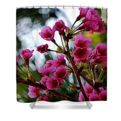 Pink Cherry Blossoms Shower Curtain by Pamela Walton