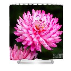 Pink Chrysanths Shower Curtain