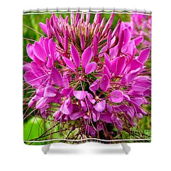 Pink Cleome Flower Shower Curtain by Rose Santuci-Sofranko