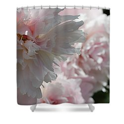 Pink Confection Shower Curtain by Ruth Kamenev