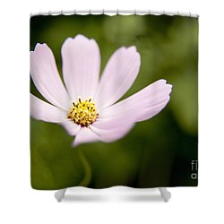 Pink Coreopsis Daisy Shower Curtain