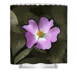 Prairie Rose Shower Curtain