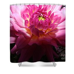 Pink Dahlia Opening Collection No. P49 Shower Curtain