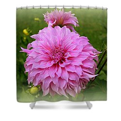 Pink Dahlia Shower Curtain by Donna Walsh