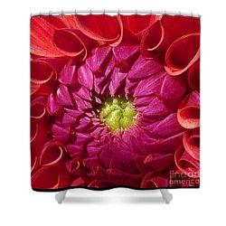 Shower Curtain featuring the photograph Pink Dahlia Variation by Susan Garren
