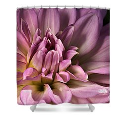 Pink Dahlia's Dream Shower Curtain by Joy Watson