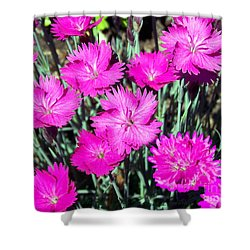Shower Curtain featuring the photograph Pink Daisies by Gena Weiser
