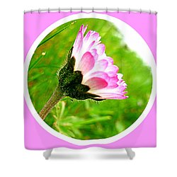 Pink Daisy  Shower Curtain by The Creative Minds Art and Photography