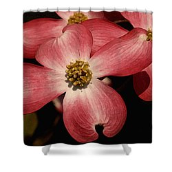 Shower Curtain featuring the photograph Pink Dogwood by James C Thomas