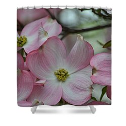 Pink Dogwood Tree Shower Curtain
