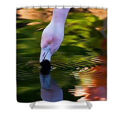 Pink Flamingo Ripples And Reflection Shower Curtain