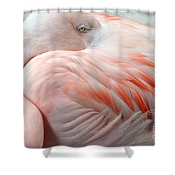 Shower Curtain featuring the photograph Pink Flamingo II by Robert Meanor