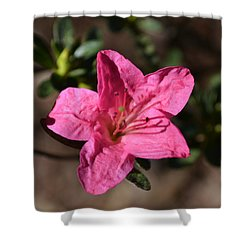 Shower Curtain featuring the photograph Pink Flower by Tara Potts
