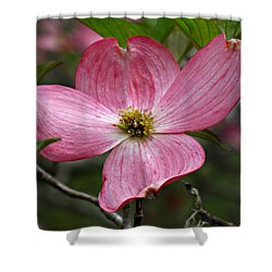 Pink Flowering Dogwood Shower Curtain