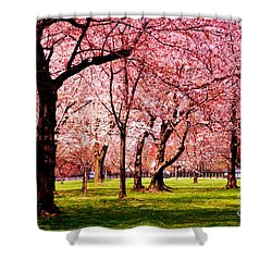 Pink Forest Shower Curtain by Patti Whitten