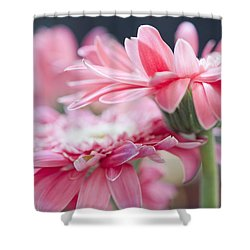 Pink Gerber Daisy - Awakening Shower Curtain