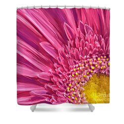 Pink Gerbera Shower Curtain by Andrea Auletta