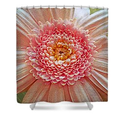 Pink Gerbera Textured Shower Curtain