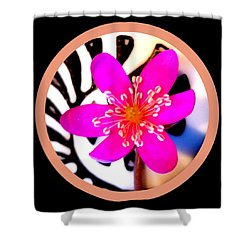 Pink Hepatica Shower Curtain by The Creative Minds Art and Photography
