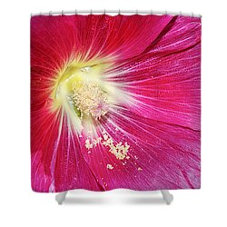 Pink Hollyhock Shower Curtain by Phyllis Denton