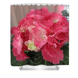Pink Hydrangea Shower Curtain by Barbara McDevitt