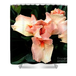 Pink Iris Shower Curtain by The Art of Alice Terrill