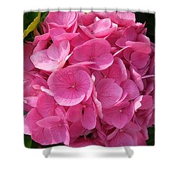 Shower Curtain featuring the photograph Blushing Rose by Jeannie Rhode