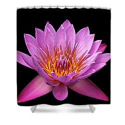 Shower Curtain featuring the photograph Pink Lady On Black by Judy Vincent