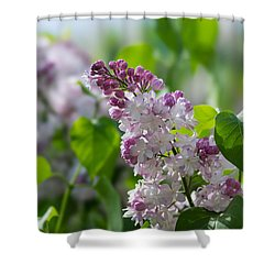 Pink Lilacs And Green Leaves - Featured 3 Shower Curtain by Alexander Senin