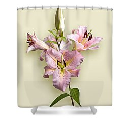 Pink Lilies On Cream Shower Curtain