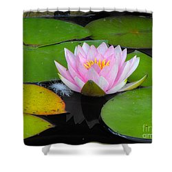 Pink Lilly Flower Shower Curtain