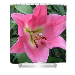 Shower Curtain featuring the photograph Pink Lily by Jeannie Rhode