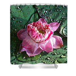 Pink Lotus Flower Shower Curtain by Venetia Featherstone-Witty