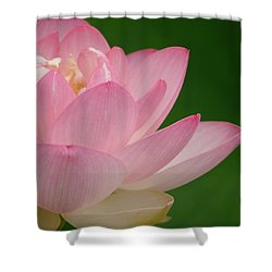Pink Lotus Shower Curtain by Jane Ford